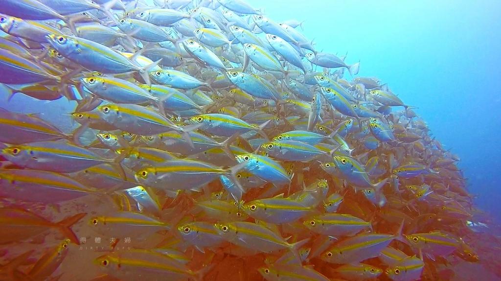 魚4.jpg