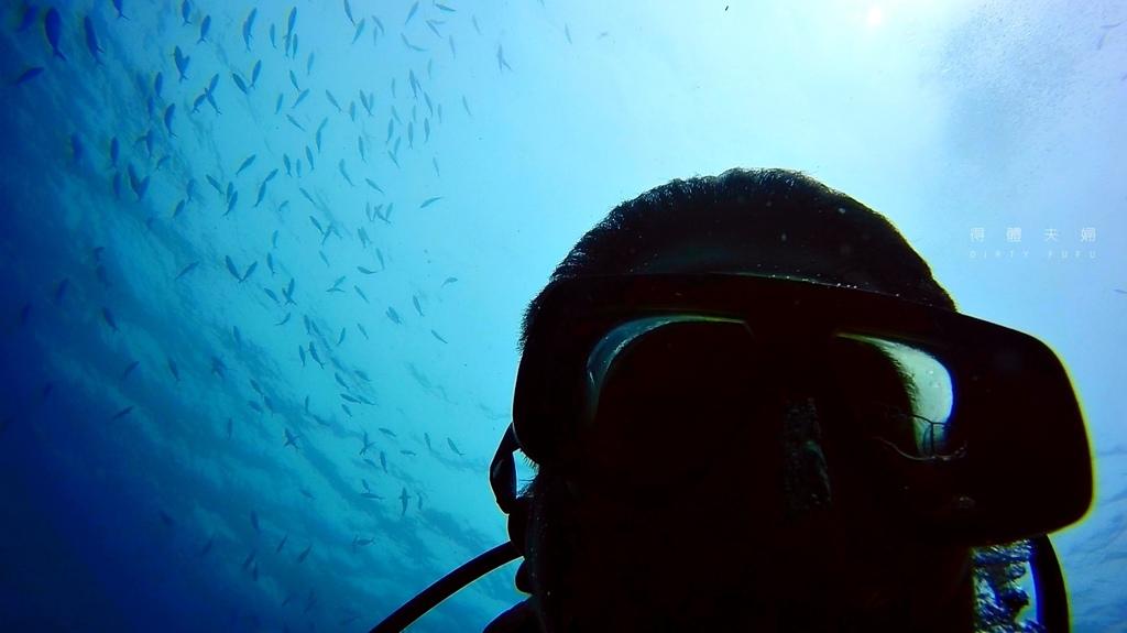 魚9.jpg