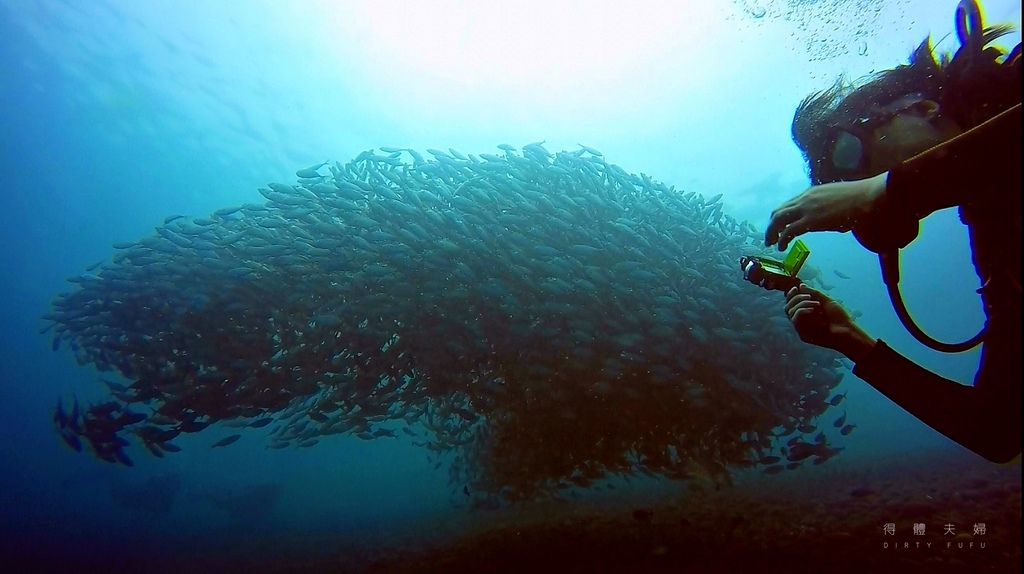魚群.jpg
