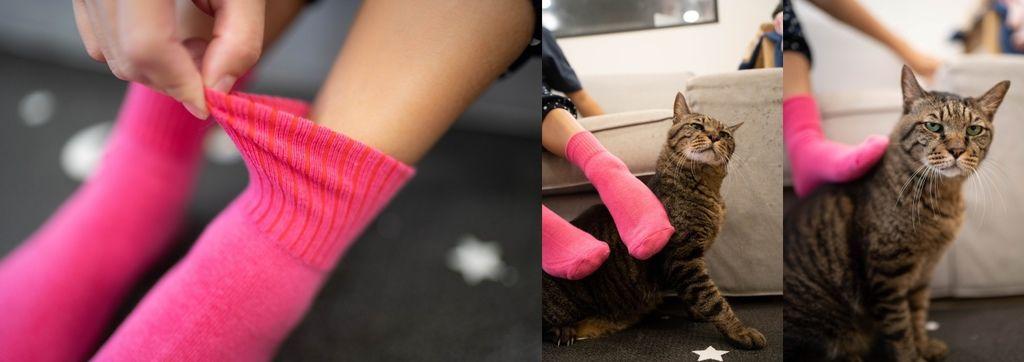 貓務襪子.jpg