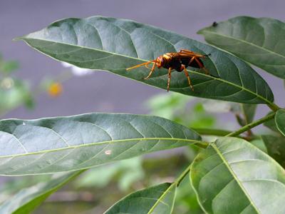 bug2-400s.jpg