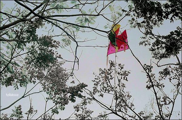 被樹枝纏住的風箏.jpg