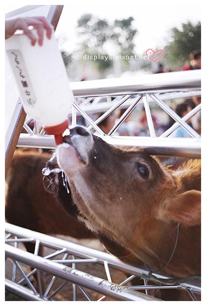 喝奶喝到流口水的小牛