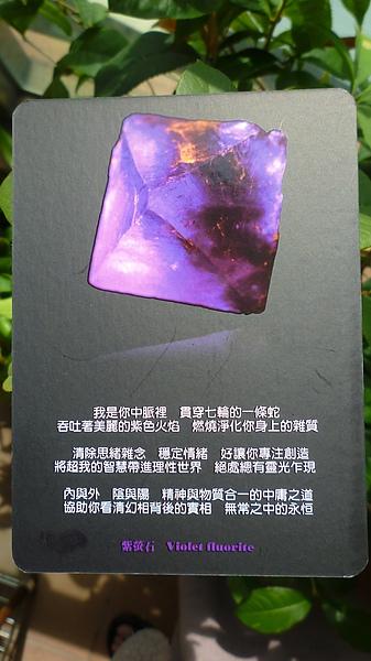 紫螢石 Violet Flouorite.JPG