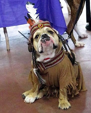 4 bulldog-indian-princess-costume.jpg