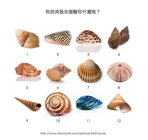 貝殼的提醒