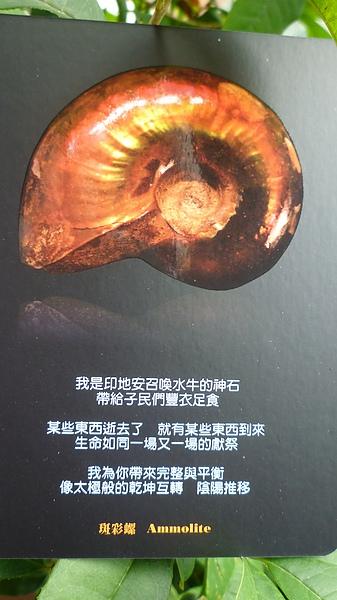 斑彩螺 Ammolite.JPG