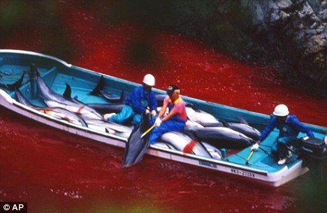 這是海盜民族 屠殺海豚 屠殺中國人 屠殺韓國人   日本人去死吧
