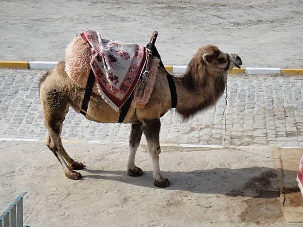 {春秋玉閣}歐亞橋樑--- 2014土耳其 之旅 (6)卡巴德基亞 蘑菇谷 駱駝岩 烏其莎城堡