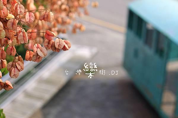IMG_6681.jpg
