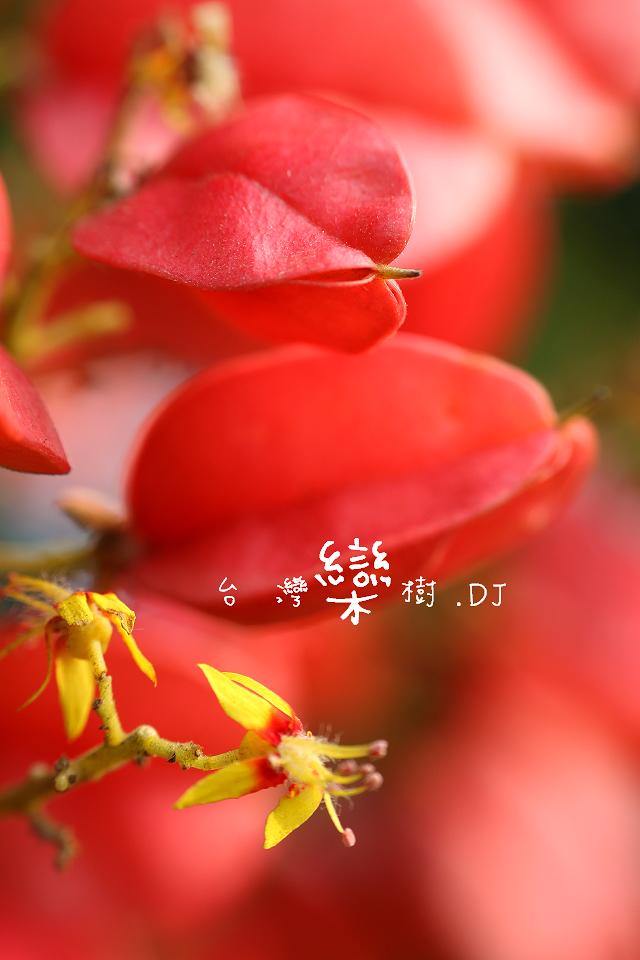 IMG_6911.jpg
