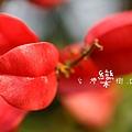 IMG_6912.jpg