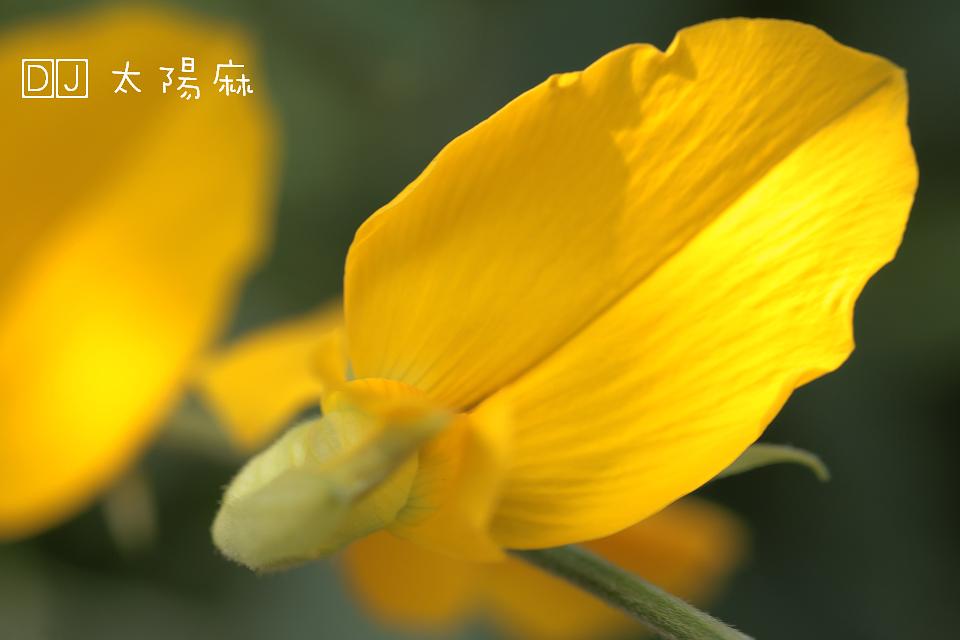 IMG_6816.jpg