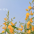 IMG_7026.jpg