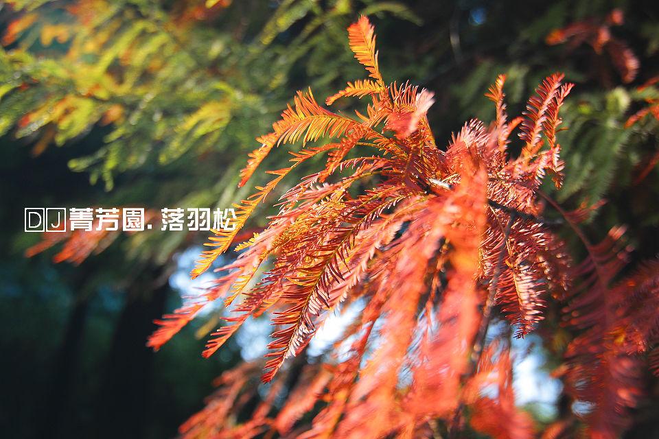 IMG_2091.JPG