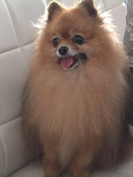 我家的愛狗  Bla