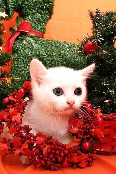 我是粉粉...祝你聖誕節快樂喔