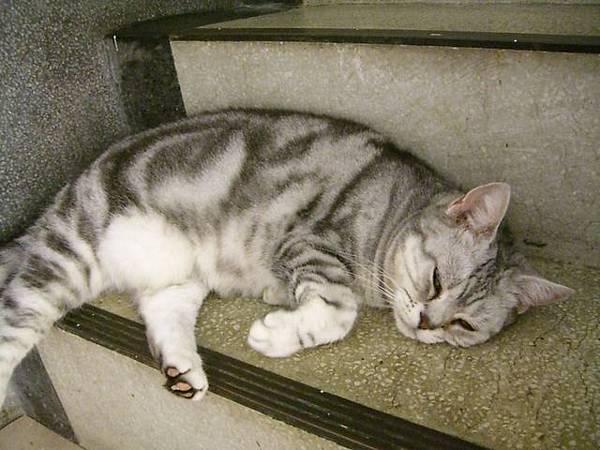 睡的真舒服