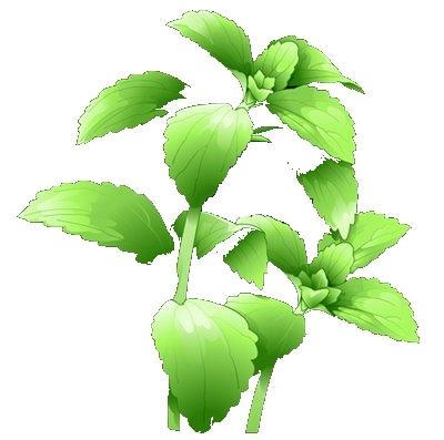 stevia006.jpg