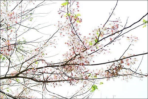 南元休閒農場37.jpg