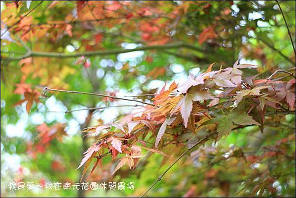 南元休閒農場39.jpg