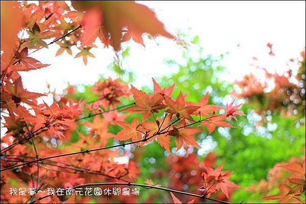 南元休閒農場59.jpg