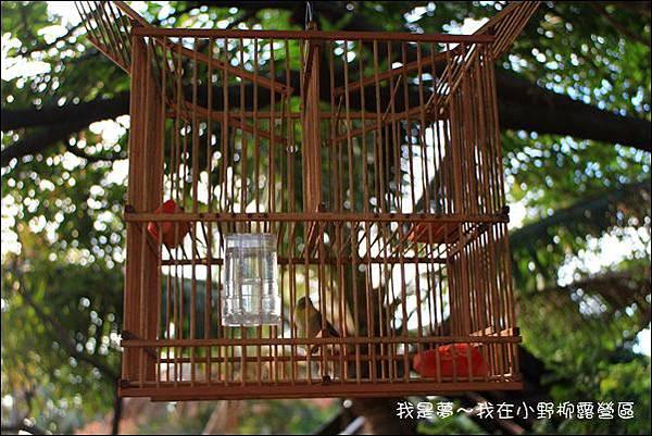 台東露營32.jpg