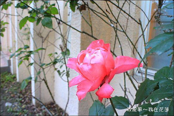 花蓮三天兩夜18.jpg