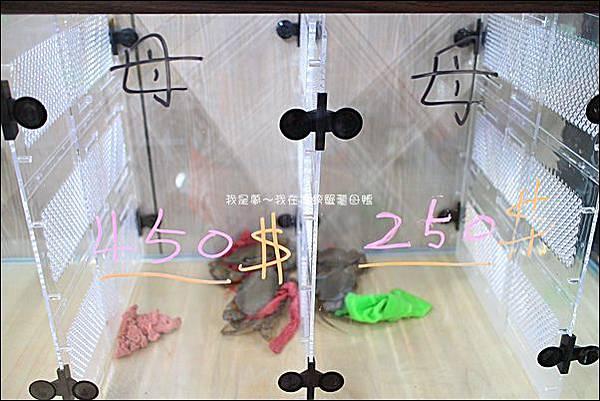 傳螃蟹薑母鴨06.jpg