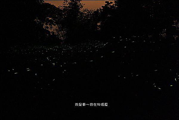 那瑪夏賞螢07.jpg