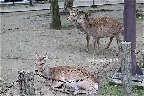 日本賞櫻5日遊04.jpg