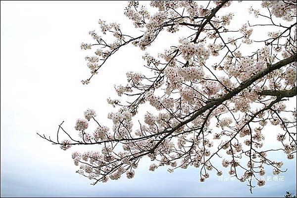日本賞櫻5日遊26.jpg
