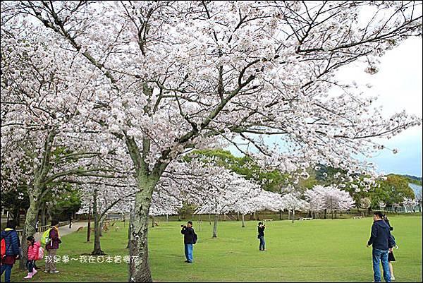 日本賞櫻5日遊27.jpg