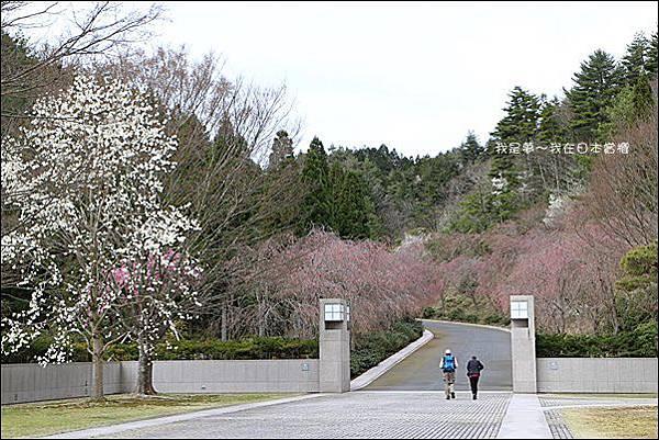 日本賞櫻5日遊07.jpg
