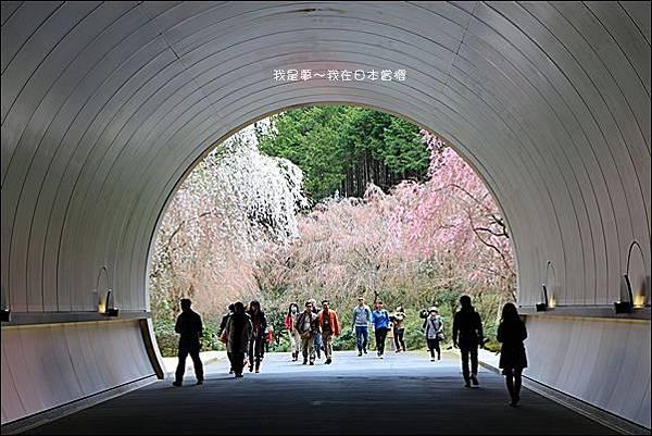 日本賞櫻5日遊17.jpg