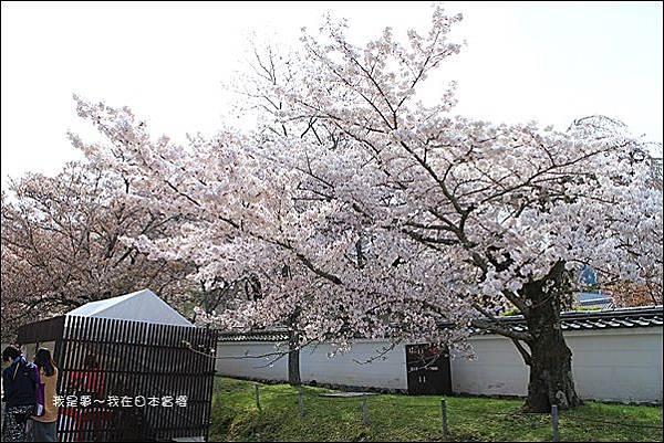 日本賞櫻5日遊02.jpg