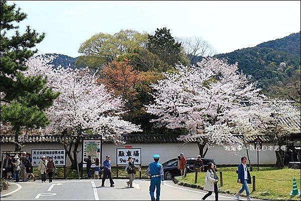日本賞櫻5日遊23.jpg