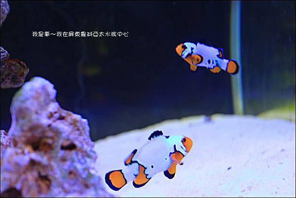 屏東農科亞太水族中心08.jpg