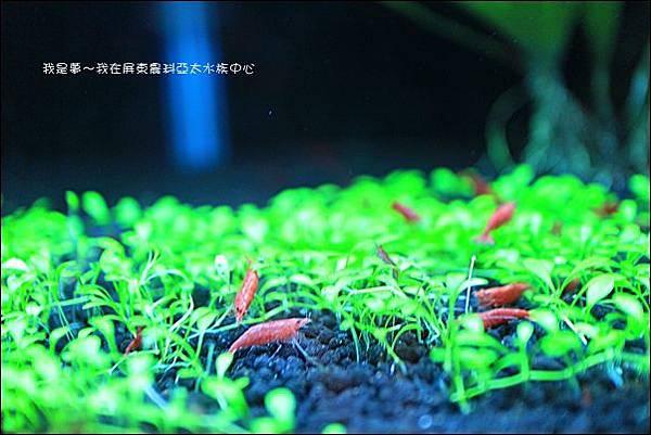 屏東農科亞太水族中心19.jpg