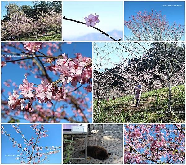 六龜寶山二集團櫻花公園18.jpg