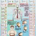 人體神經圖01