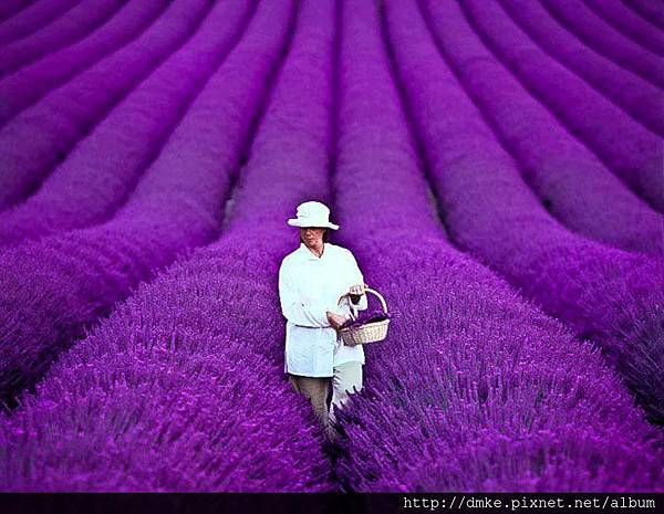 Lavender Fields-France