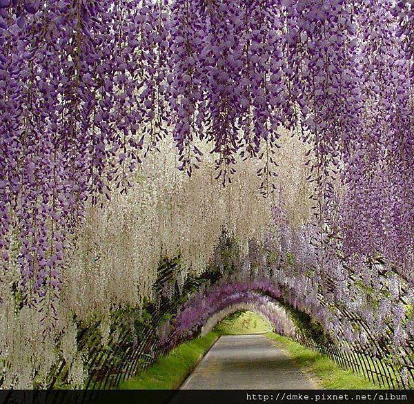 日本河內_ 富士花園