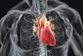 「心臟」的圖片搜尋結果