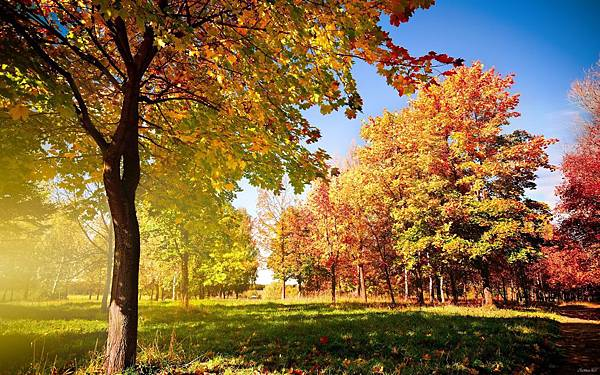 color-early-fall-hd-desktop-wallpaper