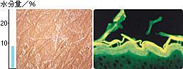 乾燥敏感皮膚