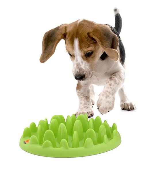 green_mini_puppy_v05.jpg