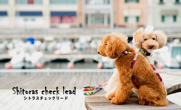 lead_lshitrascheckl_image.jpg