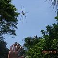 八連溪的蜘蛛