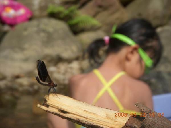 蜻蜓與女孩